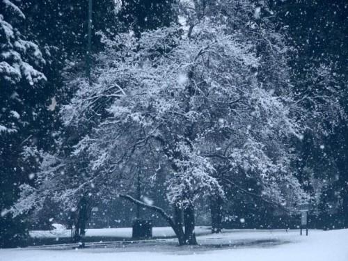 nevicata.jpg