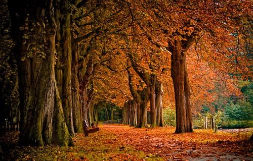 autumn-8.jpg