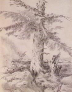 Emilyfir tree