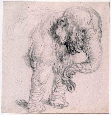 elephantRembrandt