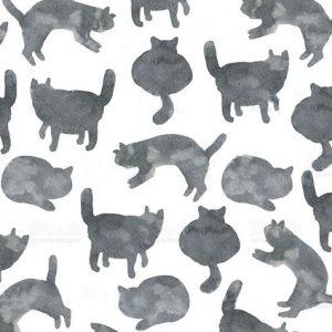 Di che colore sono i gatti al buio?